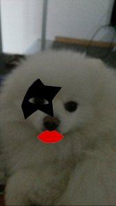 KISSchi