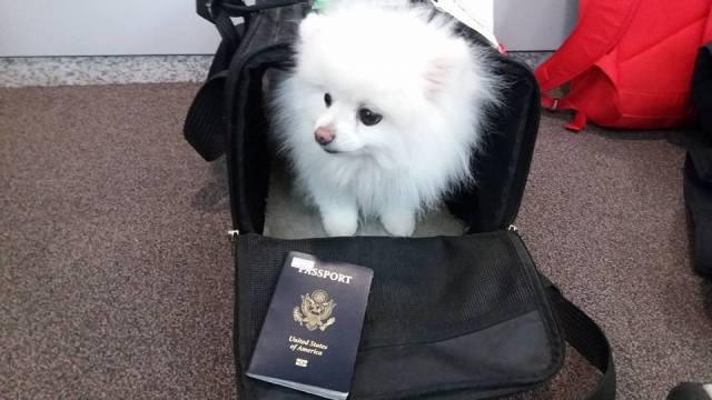 Kimchi passport